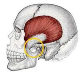 TMJ physiotherapy Perth